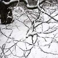 Snow and iced branches