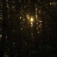 Sunlight through the trees of the forest at Cherokee Marsh