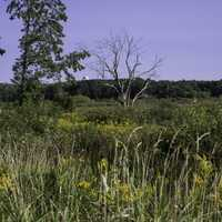 Trees and Wild Grasses at Cherokee Marsh