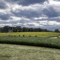 Visitors looking at sunflowers under the clouds at Pope Conservancy Farm