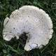White Mushroom in the grass