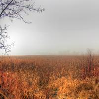Misty Marsh in Madison, Wisconsin