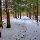 Snowy Forest Trail in Madison, Wisconsin