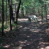 Wooded Walkway at Mill Bluff State Park, Wisconsin
