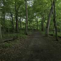 Wooded and shaded hiking path