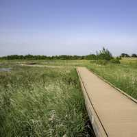 Boardwalk going out into the grasslands