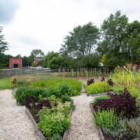 Crops and plant plots in the garden