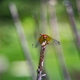 Dragonfly resting on stem