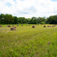 Hay Bales on the grass