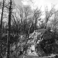 Black and White of Rock and trees at Quincy Bluff, Wisconsin