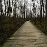 Boardwalk and Forest