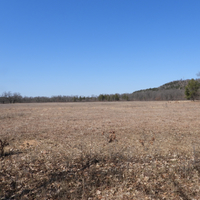 Clearing landscape at Quincy Bluff