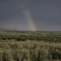 Rainbow in the trees in the forest landscape at Quincy Bluff, Wisconsin