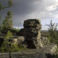 Rock with pine trees at Quincy Bluff, Wisconsin