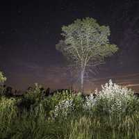 Starry Skies over the Tree and Marsh Grass at Meadow Valley