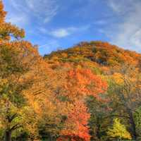 Autumn forest with trees in Perrot State Park, Wisconsin