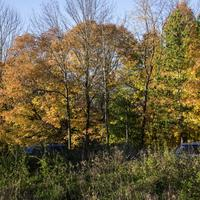 Tree Foliage and autumn colors at Pike Lake State Park, Wisconsin