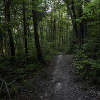 Green wooded forest path at Rocky Arbor State Park