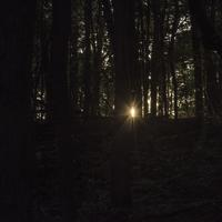 Sunlight piercing through the woods