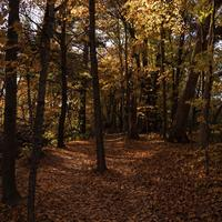 Autumn Forests Full of Foliage at Pewit's Nest, Wisconsin