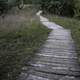 Boardwalk Path at Ferry Bluff