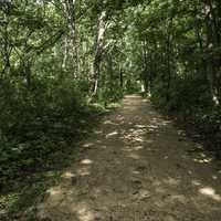 Dark Forested Path at Camrock County Park