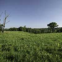 Grassland and meadow landscape