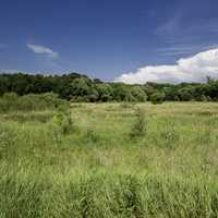 Grassland under blue skies landscape