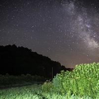 Milky Way Galaxy above the tall grass at Hogback Prairie