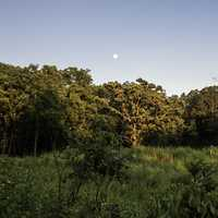 Moon above the Tree line at Stewart County Park