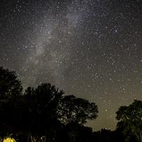 Stars and Milky Way above the trees at Blackhawk lake Recreation Area, Wisconsin