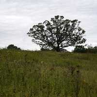 Tree and grassy field landscape