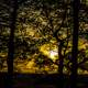 Yellow Dusk Through the Trees at Gibraltar Rock, Wisconsin, Free Stock Photo