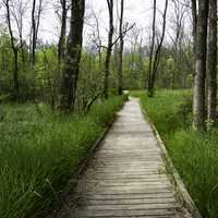 Wooden boardwalk in the trees