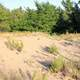 Sand Dunes at Whitefish Dunes State Park, Wisconsin