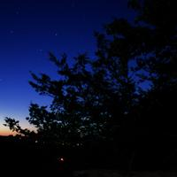 Forest, sky, and stars at Wildcat Mountain State Park, Wisconsin