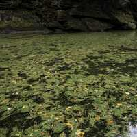 Green plants and Algae in the water at Wisconsin Dells