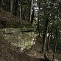 Rock, Trees and forest in Wisconsin Dells
