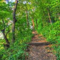 Forest Path at Wyalusing State Park, Wisconsin