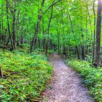 Hiking Path at Wyalusing State Park, Wisconsin