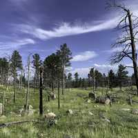Trees and grass landscape at Devil's Tower