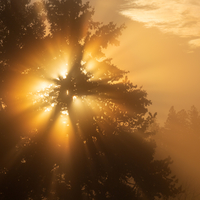 Foggy Yellow Sunrise
