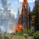 Forest Fire in Yellowstone National Park, Wyoming