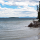 Yellowstone lake shoreline with fallen tree