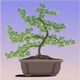 Bonsai Tree Vector Clipart