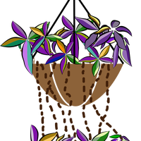 Bromeliads flowers vector clipart