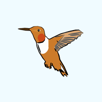 Brown and white hummingbird Vector Clipart