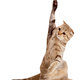 Cat raising hand vector clipart