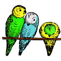 Colored Parakeets vector clipart