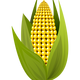 Corn Vector Clipart